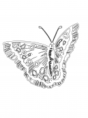 Amazing Butterfly Coloring Sheet