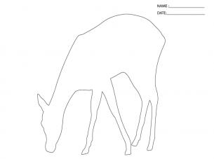 deer activities templates