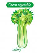 Green Vegetable - celery
