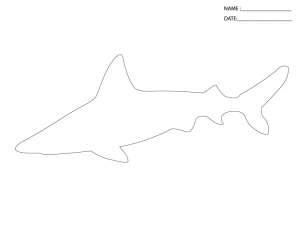 It is a graphic of Transformative Printable Shark Template