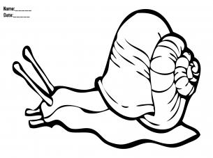 activity templates snail