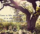 Quotes about Love -Wildflowers