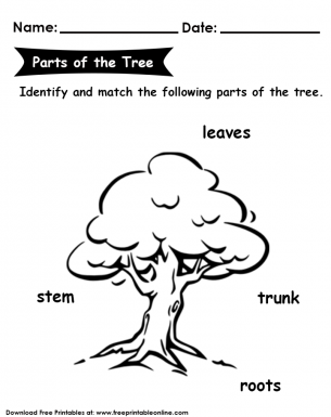 Parts of the Tree Kids Worksheet