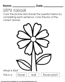 Flower Coloring - Kids Worksheet with question and answer by coloring in worksheet