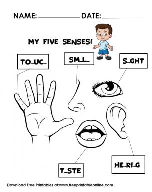 the senses worksheet