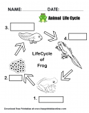 Animal Life Cycle