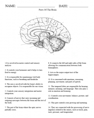Brain systems