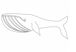 free printable whale coloring sheet